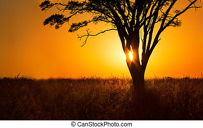 Landscape close-up of orange sunrise through tree