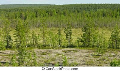 Northern landscape with pines and bog Russia - Video...