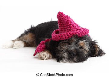 Tired puppy with hat lying on the floor in front of white...