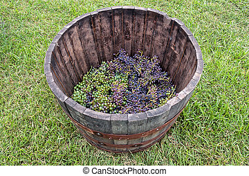 Grape Stomp - Open wine barrel with grapes inside