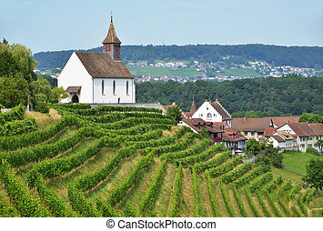 Vineyards in Rheinau, Switzerland
