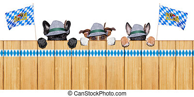 bavarian dogs - three bavarian  dogs behind a fence