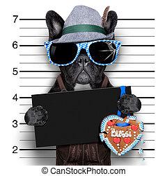 mugshot dog - mugshot bavarian dog with an empty blank...