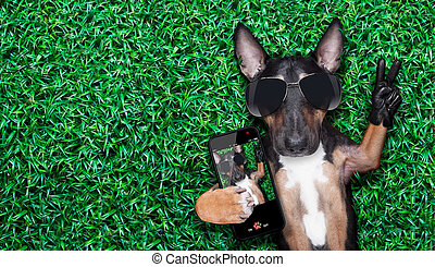 dog selfie - dog taking a selfie on a meadow with peace and...