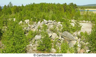 Northern landscape with pines and rocks. Russia
