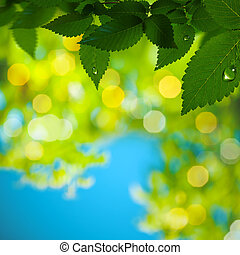 Abstract summer backgrounds with green foliage and morning dew