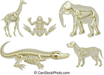 Skeletons of animals - Illustration of the skeletons of...