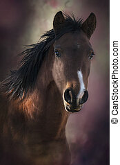 Profile of a Brown Horse - Profile photo of a brown mare...
