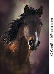 perfil, marrón, caballo