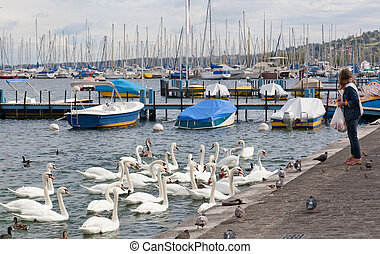 woman feeds swans on the bank of the lake in Geneva,...