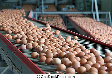 Eggs on a poultry factory - Fresh brown eggs on a...