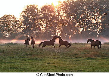 jumping playing horses in sunrise fog