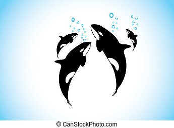 family of killer whales swim & breathing together inside...