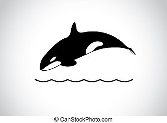 big young happy free killer whale jumping out of ocean sea...