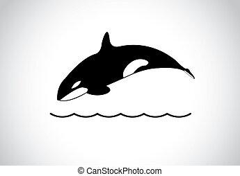 grande, joven, feliz, libre, asesino, ballena, Saltar,...