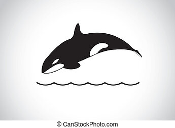 big young happy free killer whale