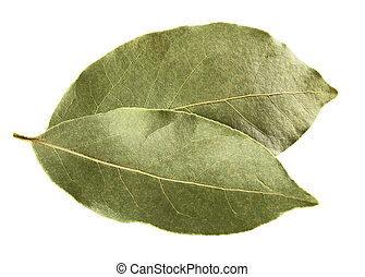 bay leaves - Aromatic bay leaves on white background....