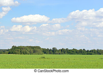Green field, forest and blue sky