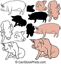 Pig Set 06 - colored hand drawn illustration