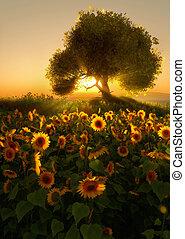 Sunflower Field, 3d CG - 3D computer graphics of a sunflower...