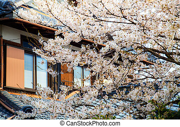 Sakura season in Japan - One of the Lake Biwa EightShiga...