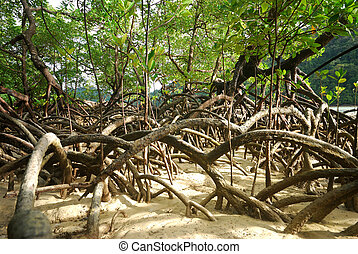 Mangrove plants growing in wetlands. A protective earth...