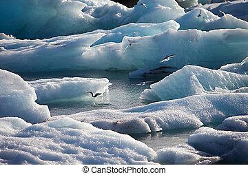 Artic Terns - Jokulsarlon lake, Iceland - Artic Terns flying...