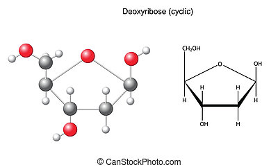 Deoxyribose - Structural chemical formula and model of...
