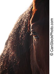 Brown horse eye close up - Brown beautiful horse eye and...