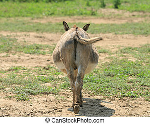 Donkey butt - Donkey behind with tail straight on