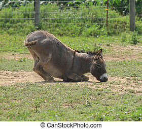 Donkey Butt - Donkey with its butt in the air