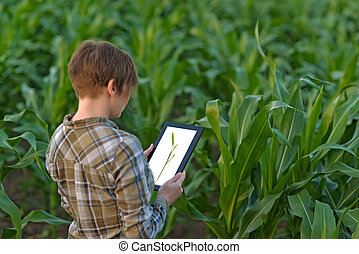 Agronomist with tablet computer in corn field - Female...