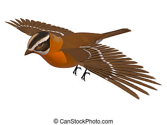 Songbird Grosbeak - 3D digital render of a flying songbird...