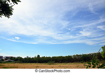 Ricefield - Sky and Cloud with Ricefield
