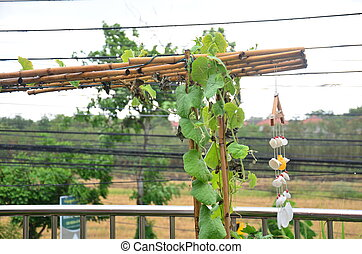 Rain drop with Vegetable garden in my House at Nonthaburi