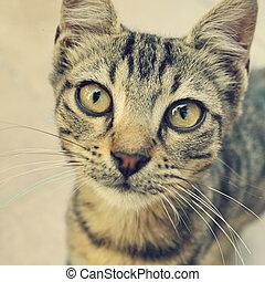 curios cat background