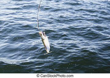 Fishing mackerel in the sea - Fishing lures or fishing hook...