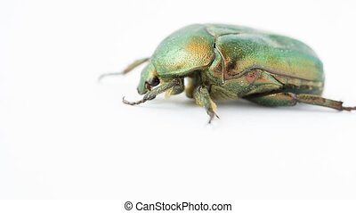 Green beetle - Closeup view of green beetle Cetonia Aurata...