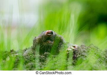 Mole head in soil Blur view through grass - Mole head in...