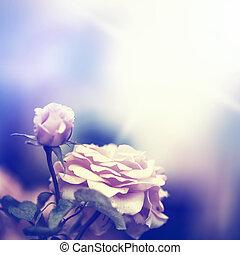 Defocus blur background with rose