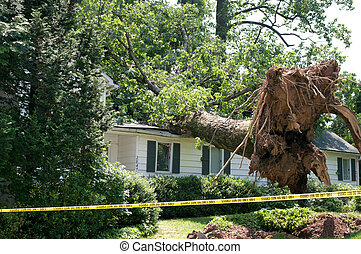 Uprooted tree fell on a house after a serious storm came...