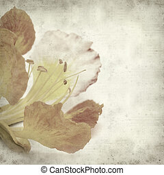 textured old paper background with delonix regia flower