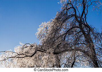 Sagging frozen tree on clear sky. - Sagging brightly lit...