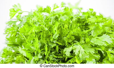 fresh herbs parsley isolated on white background