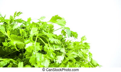 fresh herbs parsley isolated on white
