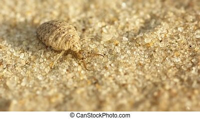 Antlion larva burrows in the sand - macro - Video 3840x2160...