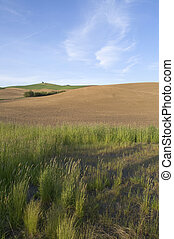 Rolling Farmland - The Grasslands of the Palouse in...