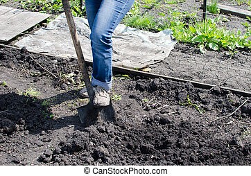 digging - Digging soil with shovel
