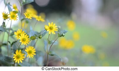 Ornamental yellow flower - Yellow ornamental flower moving...