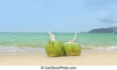 Coconuts on a Sandy Beach